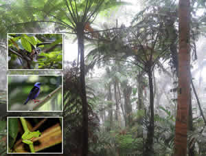 Panama Tropical forest