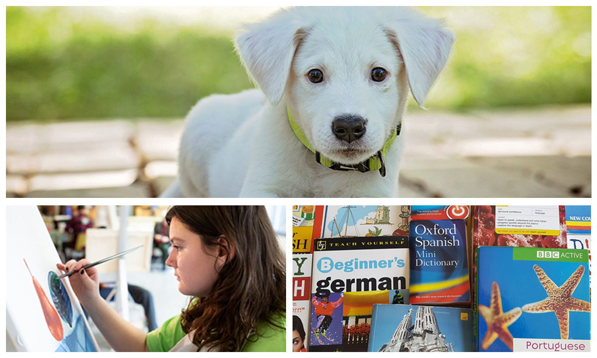 puppy, student painting, and language books