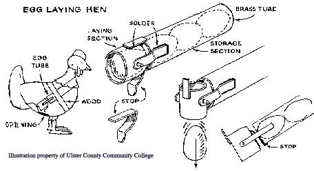Diagram of Egg Laying Hen
